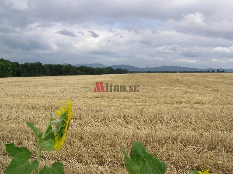 Agrarian and forest land, Buy, Galanta, Slovakia